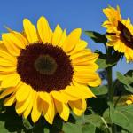 Fibonacci – Ilmu Alam Untuk Menganalisa Saham
